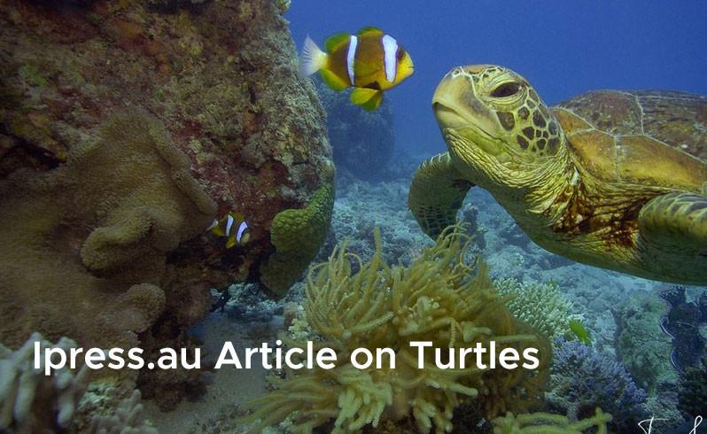 Ipress.au Article on Turtles