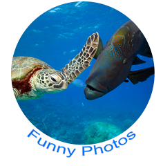 Funny Photos Icon 2.png