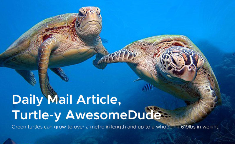 Daily Mail Article,  Turtle-y AwesomeDude