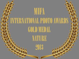 MIFA AWARD BADGE.png
