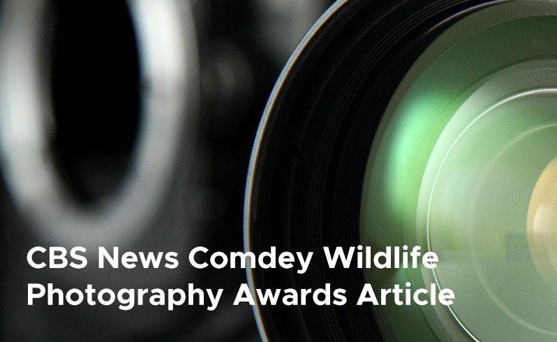 CBS News Comdey Wildlife Photography Awards Article
