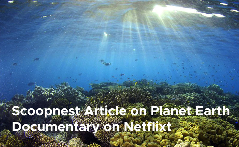 Scoopnest Article on Planet Earth Documentary on Netflix