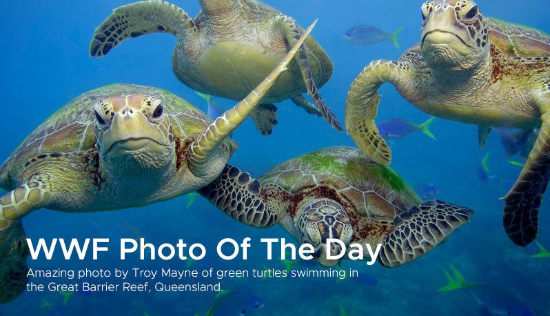 WWF Photo Of The Day