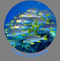 Fish Schools Icon.png
