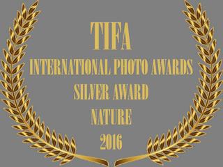TIFA AWARD BADGE.png