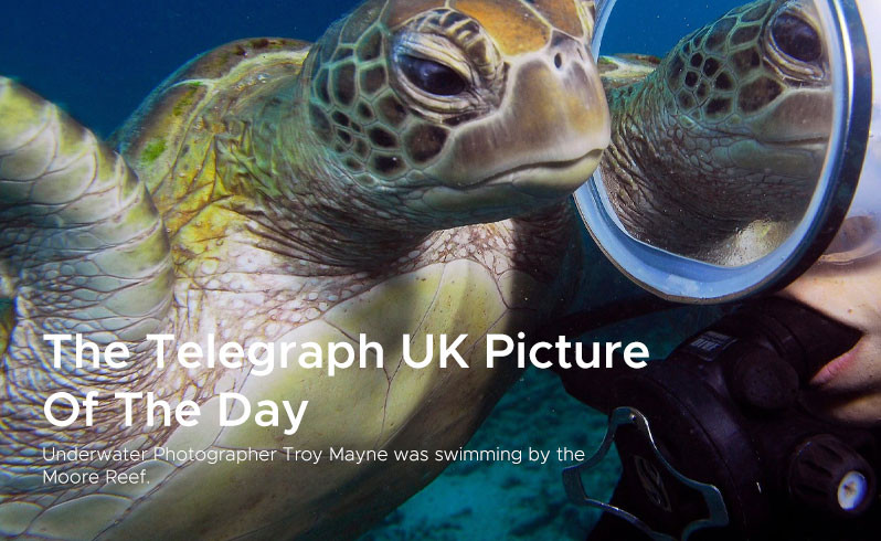 The Telegraph UK Picture  Of The Day