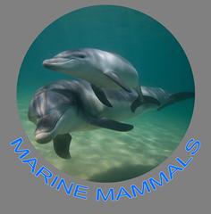 Marine Mammals Icon.png
