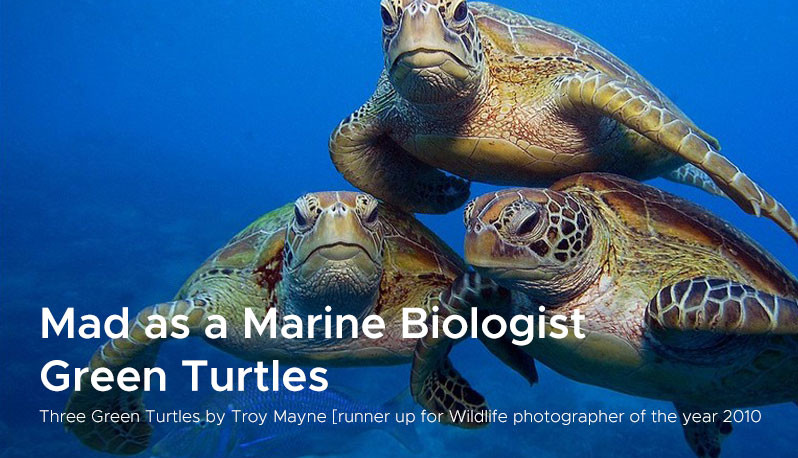 Mad as a Marine Biologist  Green Turtles
