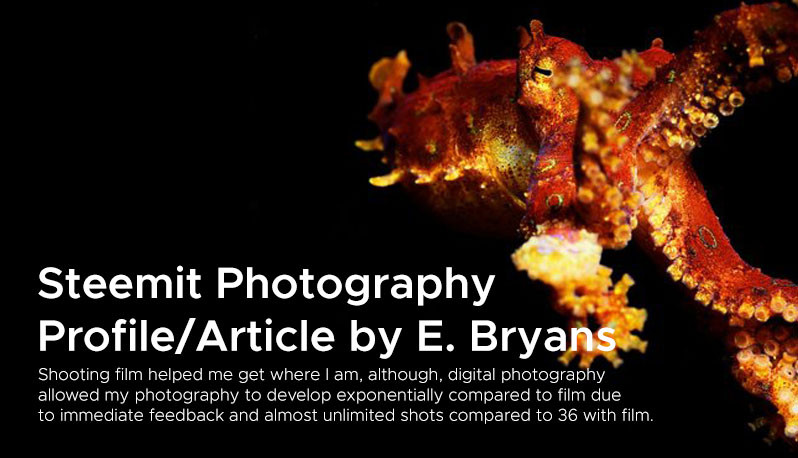 Steemit Photography  Profile/Article by E. Bryans