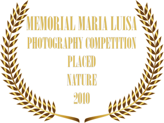 MML PHOTO COMP AWARD BADGE 2010.png