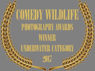 COMEDY WILDLIFE PHOTO AWARD BADGE 2017.p