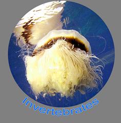 Invertebrates Icon.png