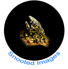Snooted Images Icon.png