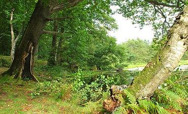 Clandeboye Forest