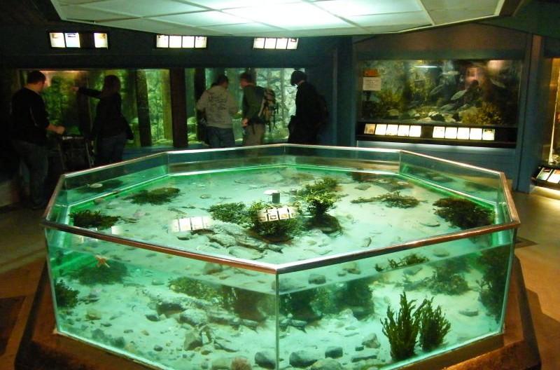 141_down_portaferry_aquariumjpg
