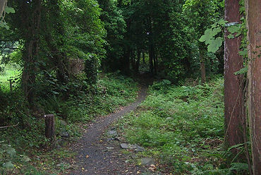 Castle Ward Forest