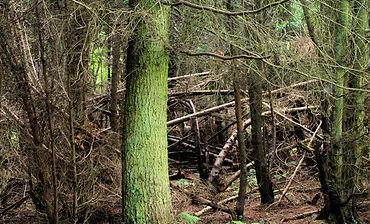 Cairn Wood (Ballysallagh Forest)