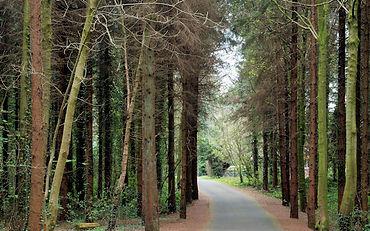 Hillsborough Forest