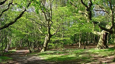 Bohill Forest