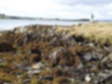 Ballyhenry Island
