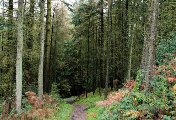 drumkeeragh_forest_3_-_geographorguk