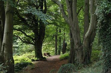 Killynether Woods