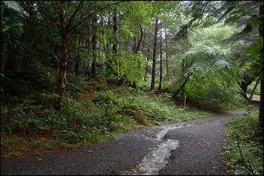 Donard Forest