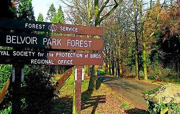 Belvoir Park Forest