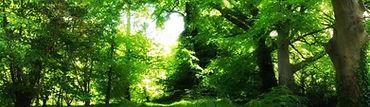 Balloo Woodland