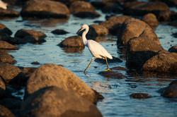 Hunting in Malibu Lagoon