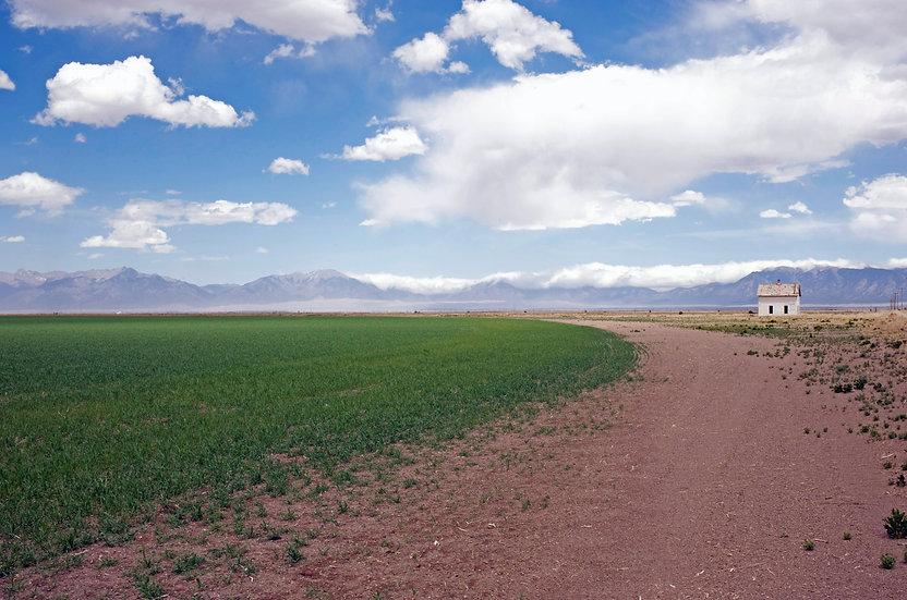 Field and Barn Mini