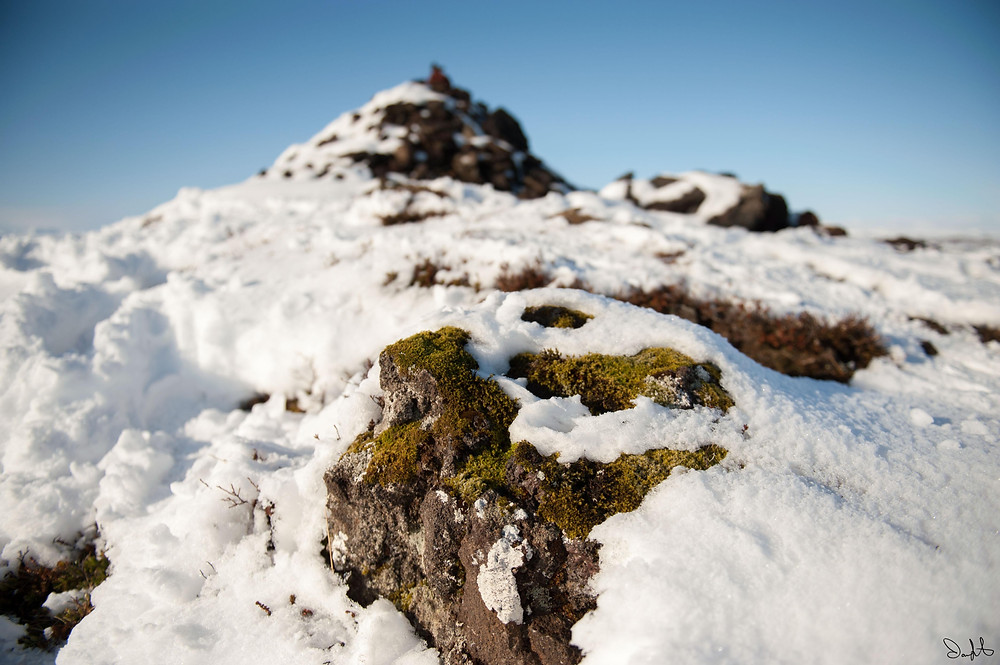 Moss and snow, Iceland