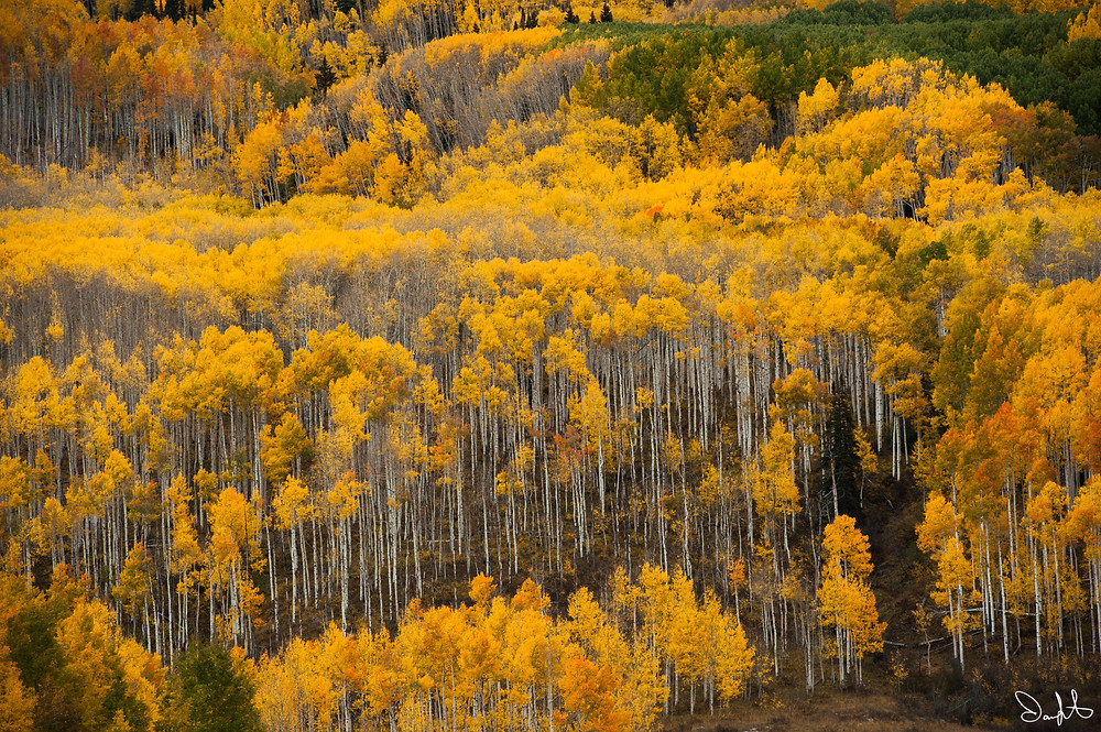 County Road 12, Gunnison National Forest