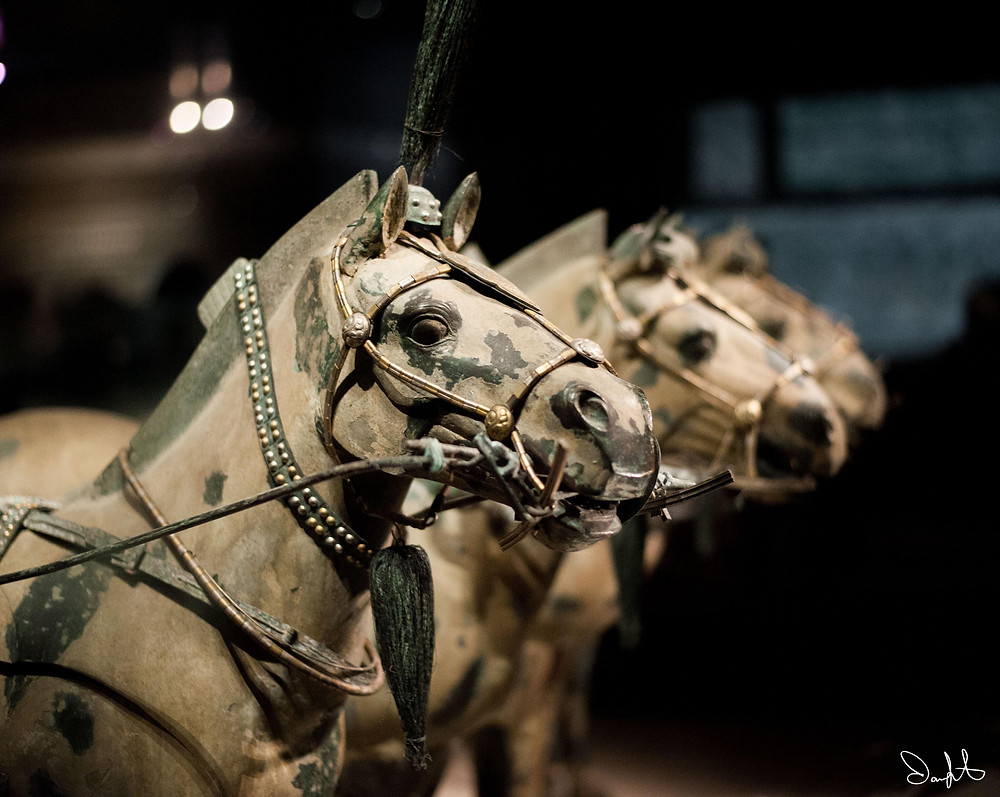 Horses from the terracotta army