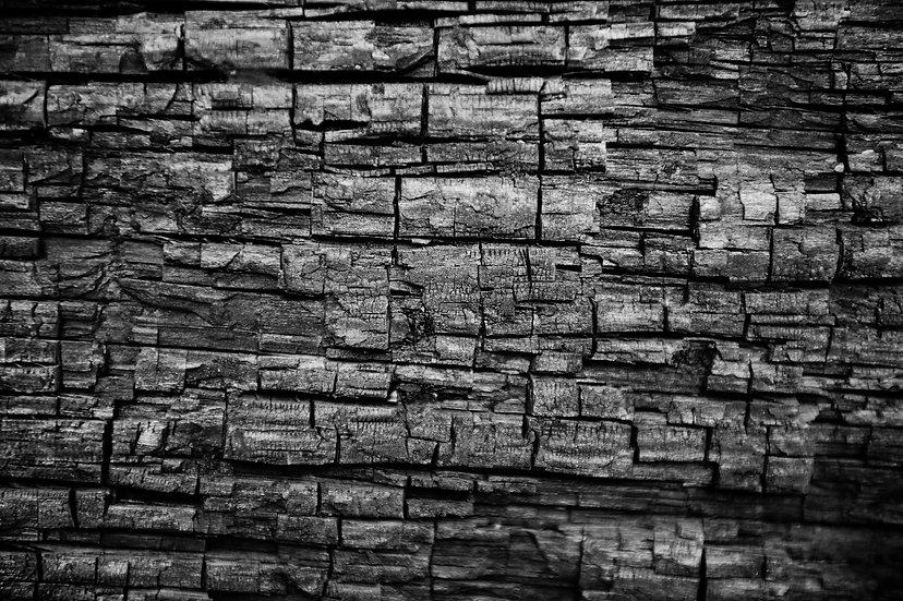 Decaying Sequoia Detail Mini