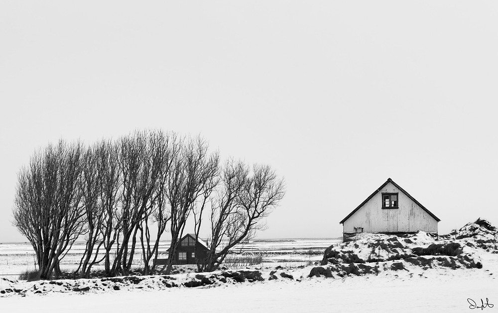 Barns and Tree, Iceland