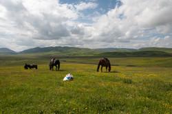 Tibet Horse Trek 4