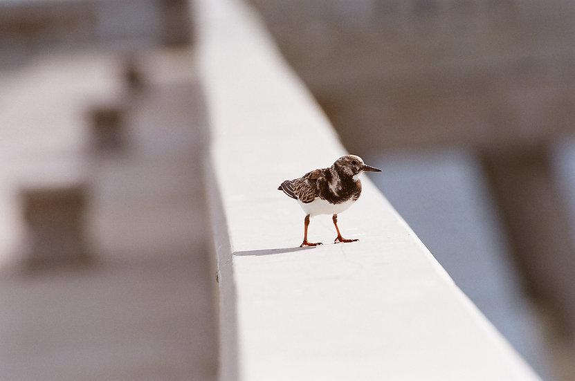 Birdie Mini