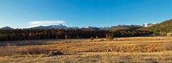 Coyote at Beaver Meadows RMNP