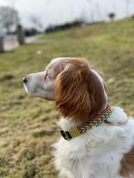 Collar hebilla Hope