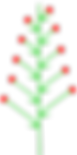 Traube_(inflorescence).png