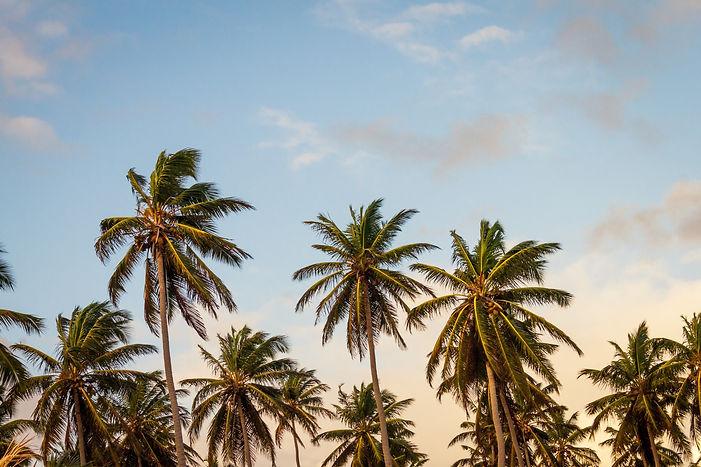 2741049-palm-tree-4k-high-resolution-wid