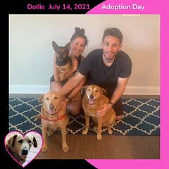 Dog adoption in charlotte nc