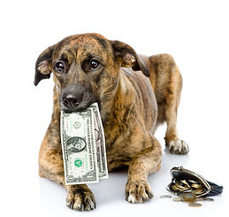 dog-with-money-in-mouth.jpg