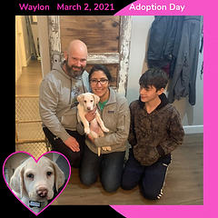 03022021Waylon Adoption Day photo.png