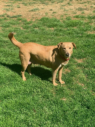Adoptable dogs Charlotte, NC