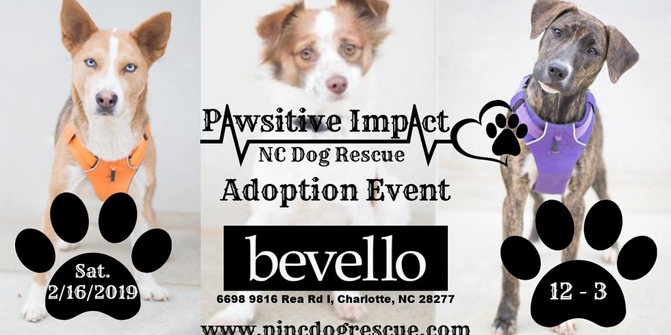 P.I.N.C. Dog Rescue Adoption Event