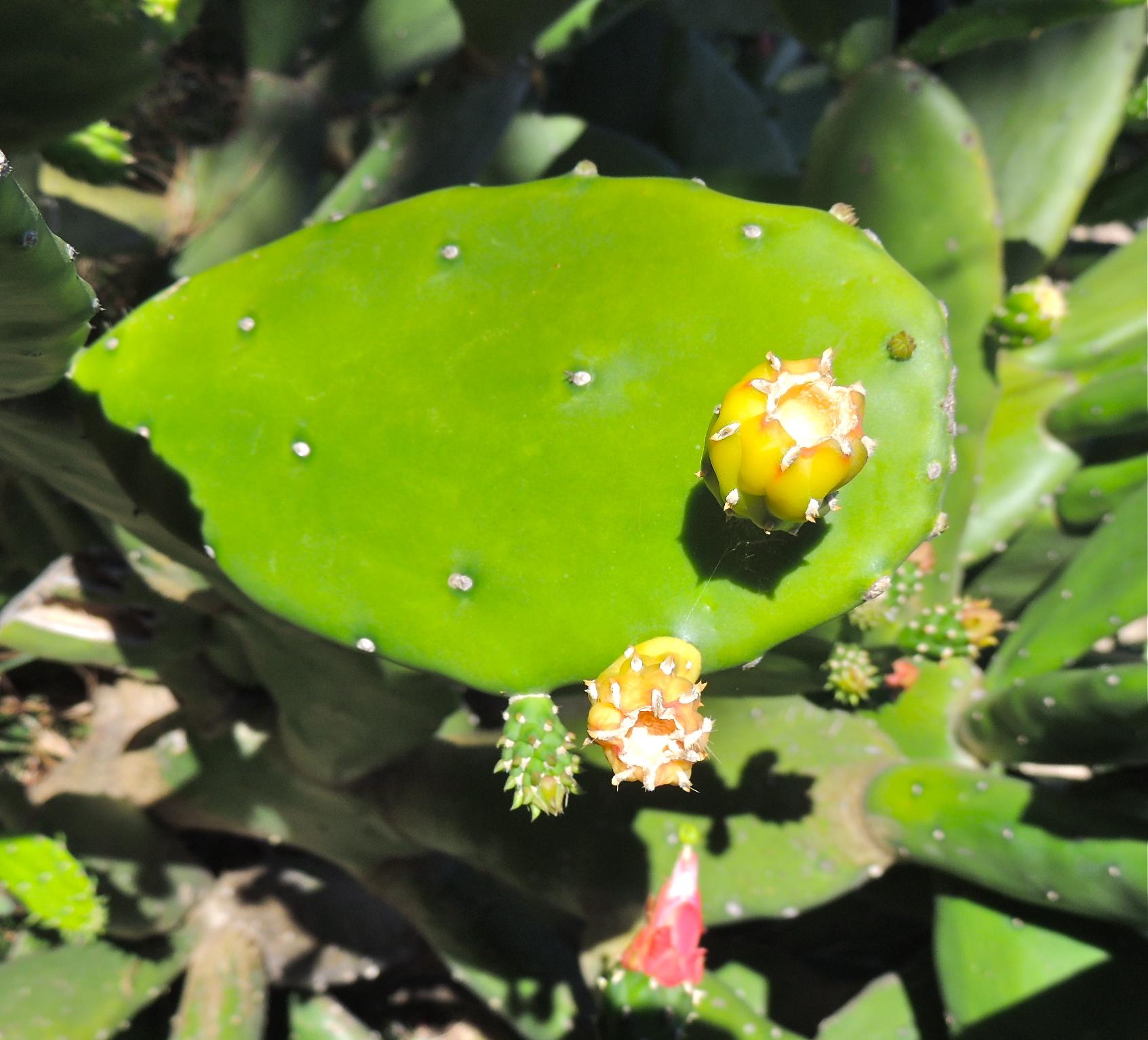 14florcactusdet.JPG