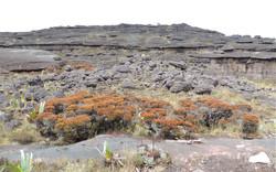 Vegetação e rochas.JPG