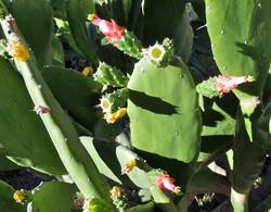 florcactus.JPG